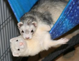 Grendel and Dexter in Hammock by Dyslexic-Ferret