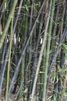 Bamboo4 by newdystock