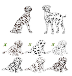 Dalmatians are here 1 left by Windhaven-Kennel