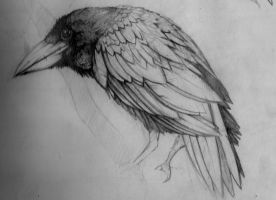 crow by Deathares