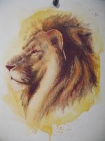 Colored pencil lion by paper-Panda