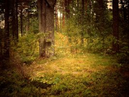 Magical forest 120 by MASYON