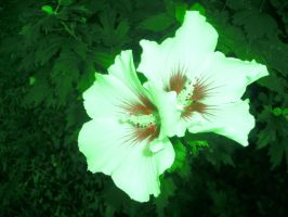 Green Hibiscus by AceOfStCanardKLy