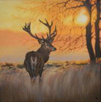 Deer at Sunset by Z-ompire