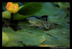 Walking Frog by TVD-Photography