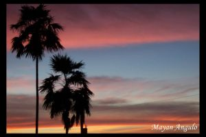 Pink Orange Palms 2 by Mayanita