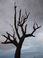 The Dead Tree by EN94GE