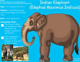 Asian-Indian Elephant Info by JwalsShop