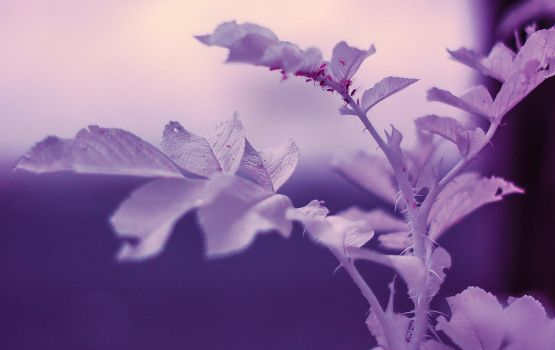 Aphids in infrared by puu4ux
