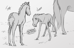 Odd Parenth - Foal Concept by Wild-Hearts