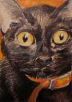 Black Cat ACEO by Jodee