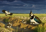 Lapwing Family by Nachiii