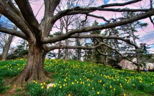 Branching off HDR by Calzinger