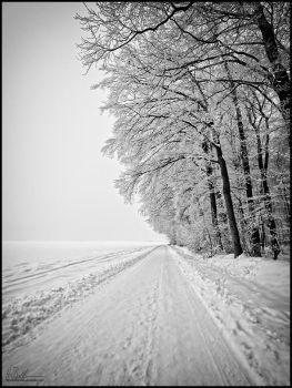 winter 2010 by neoloonatic