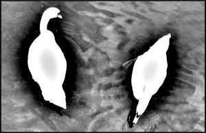 Swans 20071230 by MetalTrack