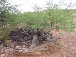 Patagonia Stick Pile by Spiteful-Pie-Stock