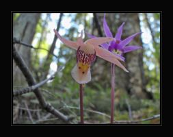 rare forest orchid by infinityloop