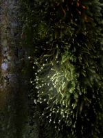 Mossy tree 2 - Edit 2 by SusuSketches