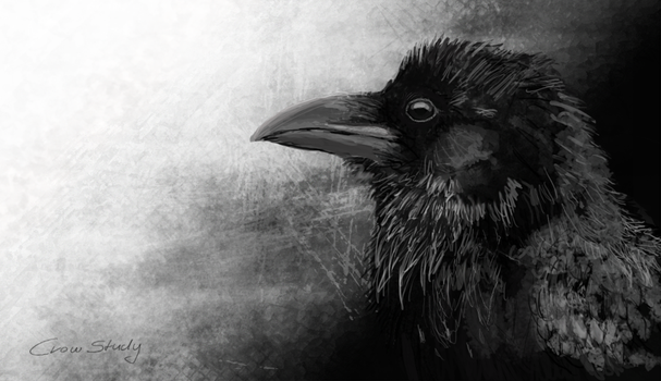 Crow by Toothsmile