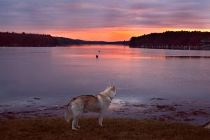 Dog at Sunset by tidesend