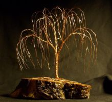 Willow on knotted fir by thedens