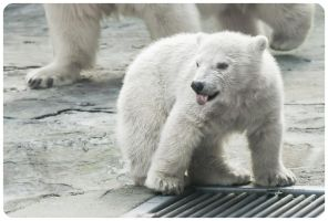 Teaser Polar Bear Cub by OrangeRoom