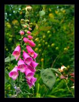 Floral bells by hamti