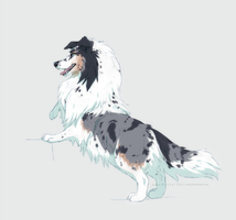 sheltie by azzai