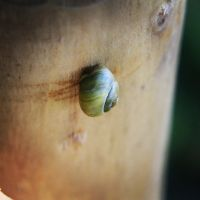 Snail by Mysteriouspizza