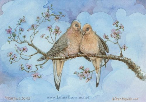 Mourning Doves by yaamas