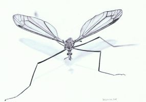Mosquito by steyfi
