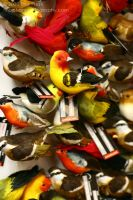 Bird Magnets - IMG_6624 by SmellsLikeDookie