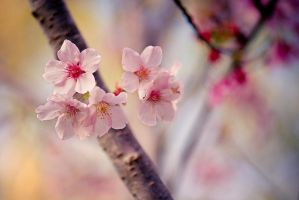 Blossom Season by Seline-W