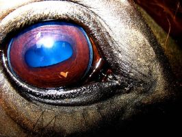 Looking into a Horses Eye by BokehSmile