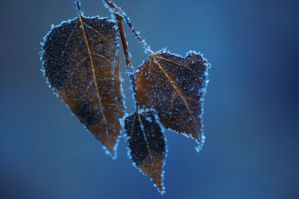 trois feuilles by contemporaryhart