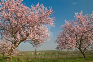 Victory of Spring 2 by ErwinStreit