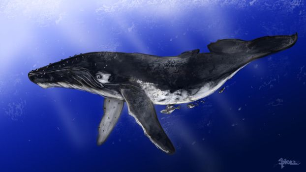 Whale by Shawnold