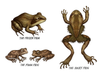 Frogs by V-L-A-D-I-M-I-R