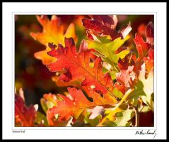 Tattered Fall by kennedmh
