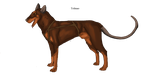 Tolmao Doberman madra by lighteningfox