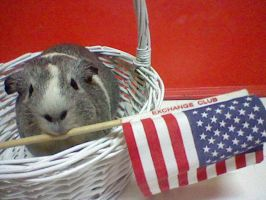 piggy can't wait till 4TH of July! by hetaliapeep