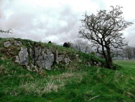 Tree and Rock Outcrop by fuguestock