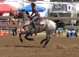 314 blue roan ~ Anoka county 4-h horse show by ponygirl0316