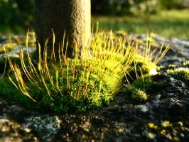 Moss by gratteloup