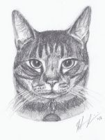 Cat #8 by H-Heather