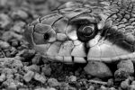 Through eyes of the Serpent by Bright-Spot-Photo