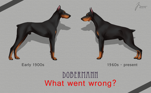 Dobermann Pinscher development by t1sk1jukka