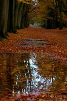 Autumn puddle by forgottenson1