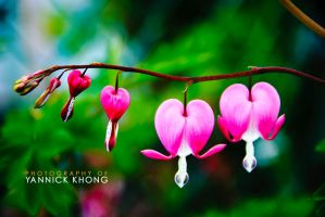 Flowers of Love by confucius-zero