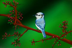Blue Jay by BoWhatElse